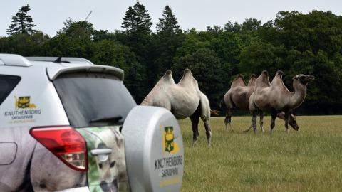 Knuthenborg Safaripark car